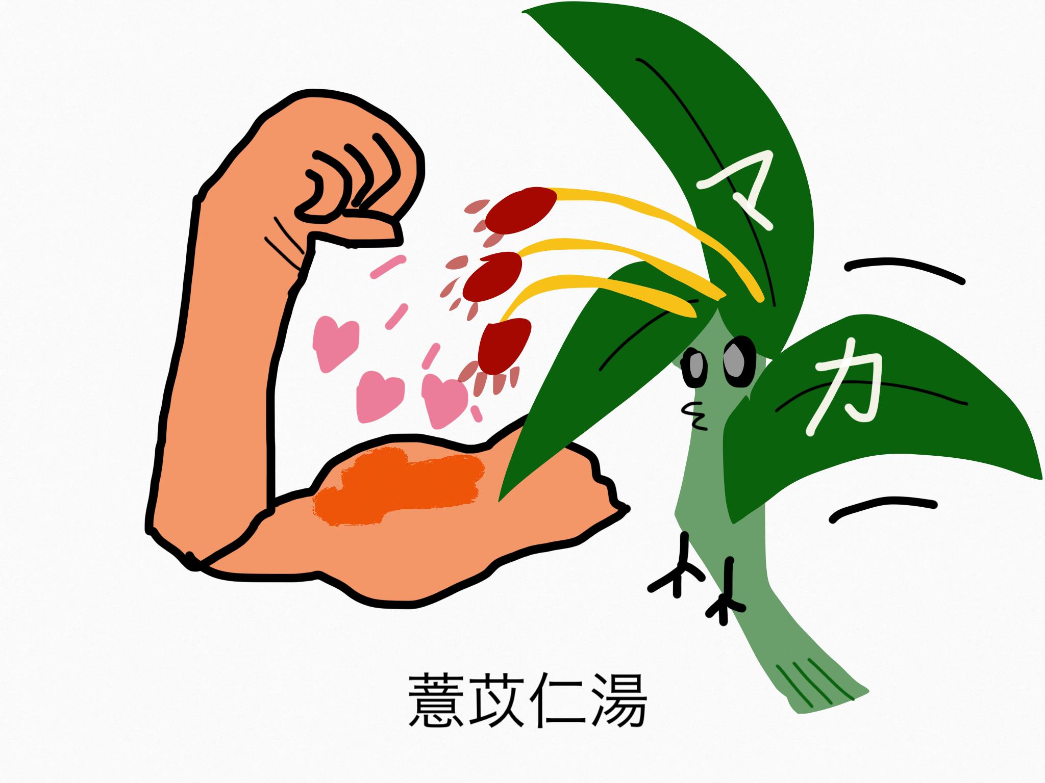 薏苡仁湯(よくいにんとう)[鎮痛]【漢方の覚え方】
