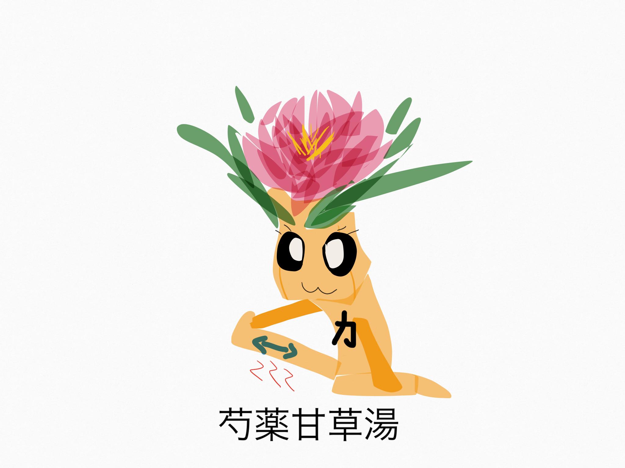 芍薬甘草湯(しゃくやくかんぞうとう)[鎮痛]【漢方の覚え方】