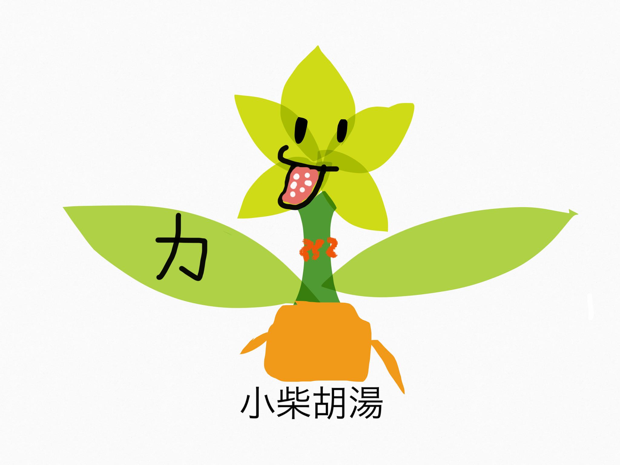 小柴胡湯(しょうさいことう)[かぜ]【漢方の覚え方】