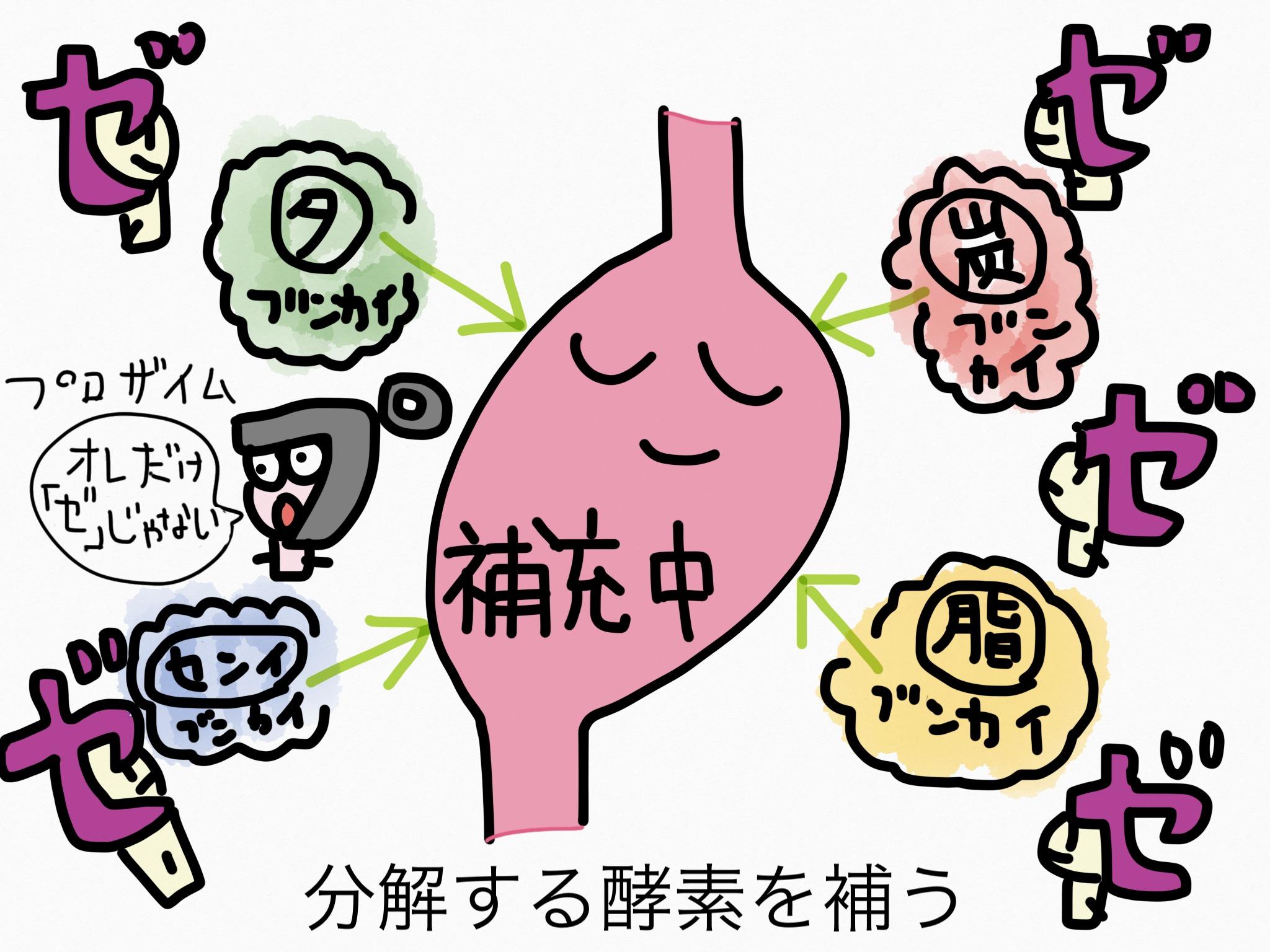 胃薬の成分まとめ・覚え方③消化成分