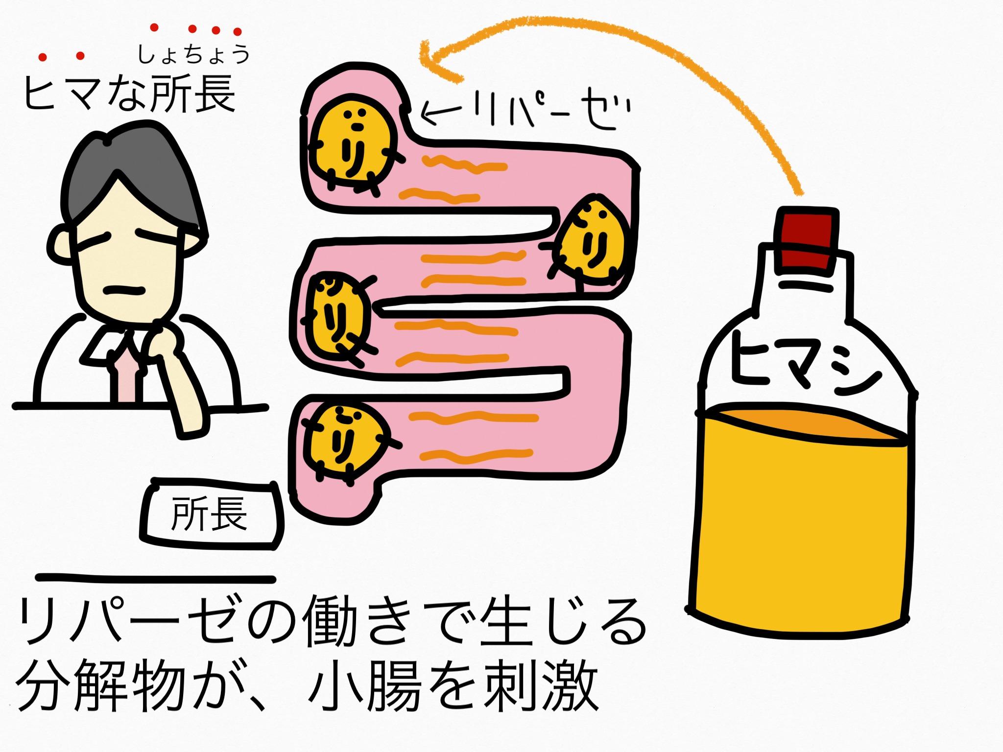 腸の薬の成分まとめ・覚え方⑤瀉下成分(小腸刺激性)