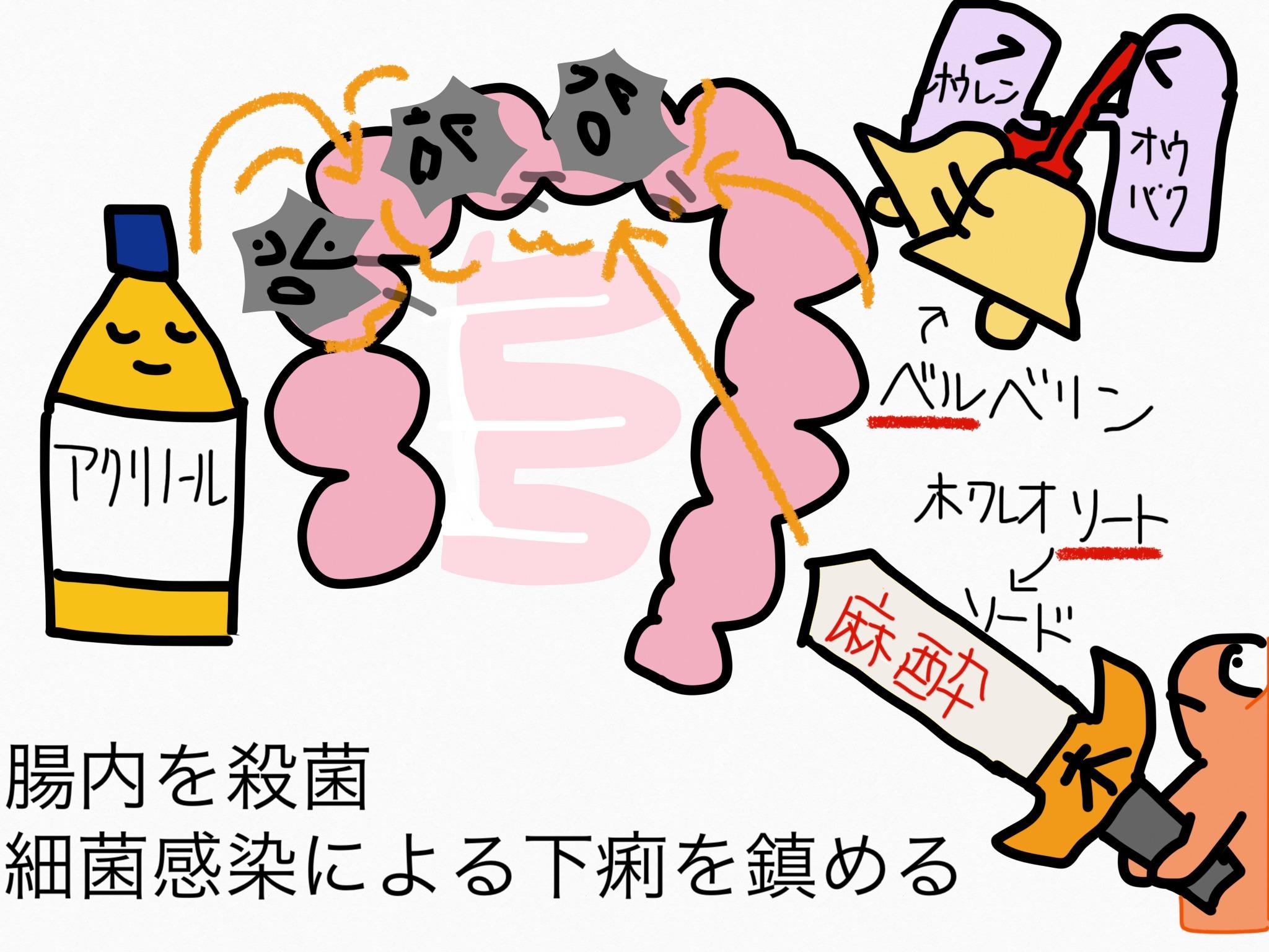 腸の薬の成分まとめ・覚え方④止瀉成分(腸内殺菌)