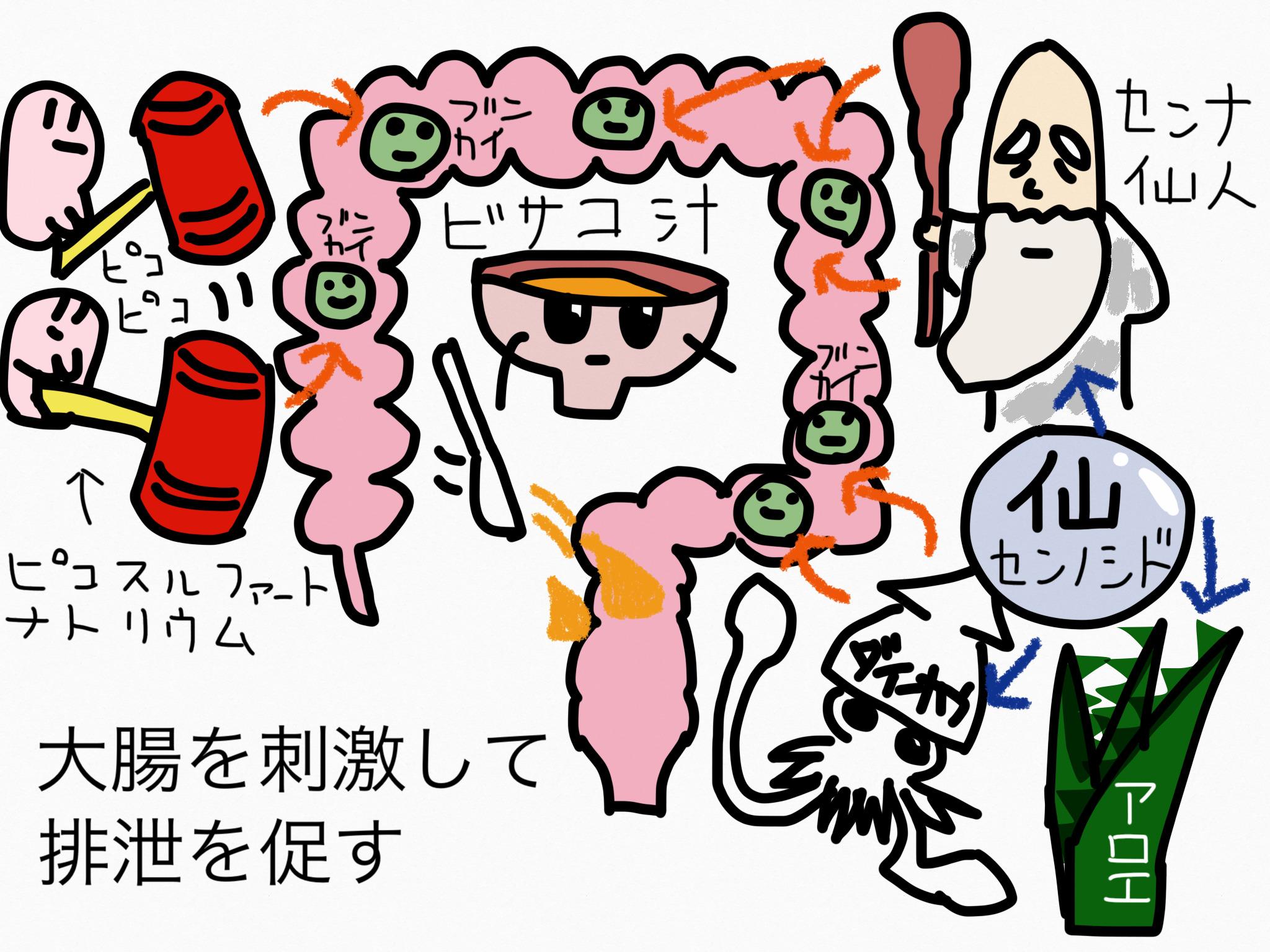 腸の薬の成分まとめ・覚え方⑥瀉下成分(大腸刺激性)