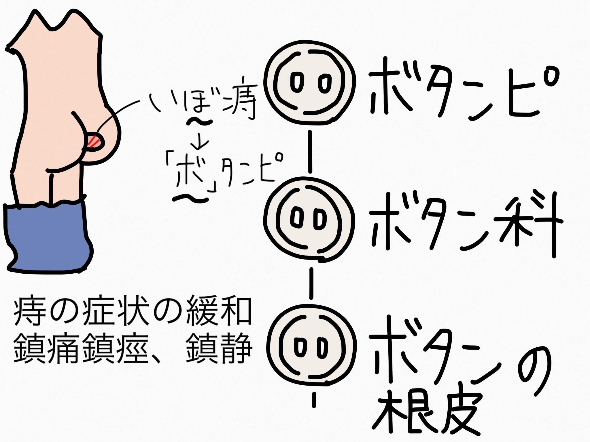 ボタンピ[解熱鎮痛薬他]【生薬の覚え方・暗記方法】
