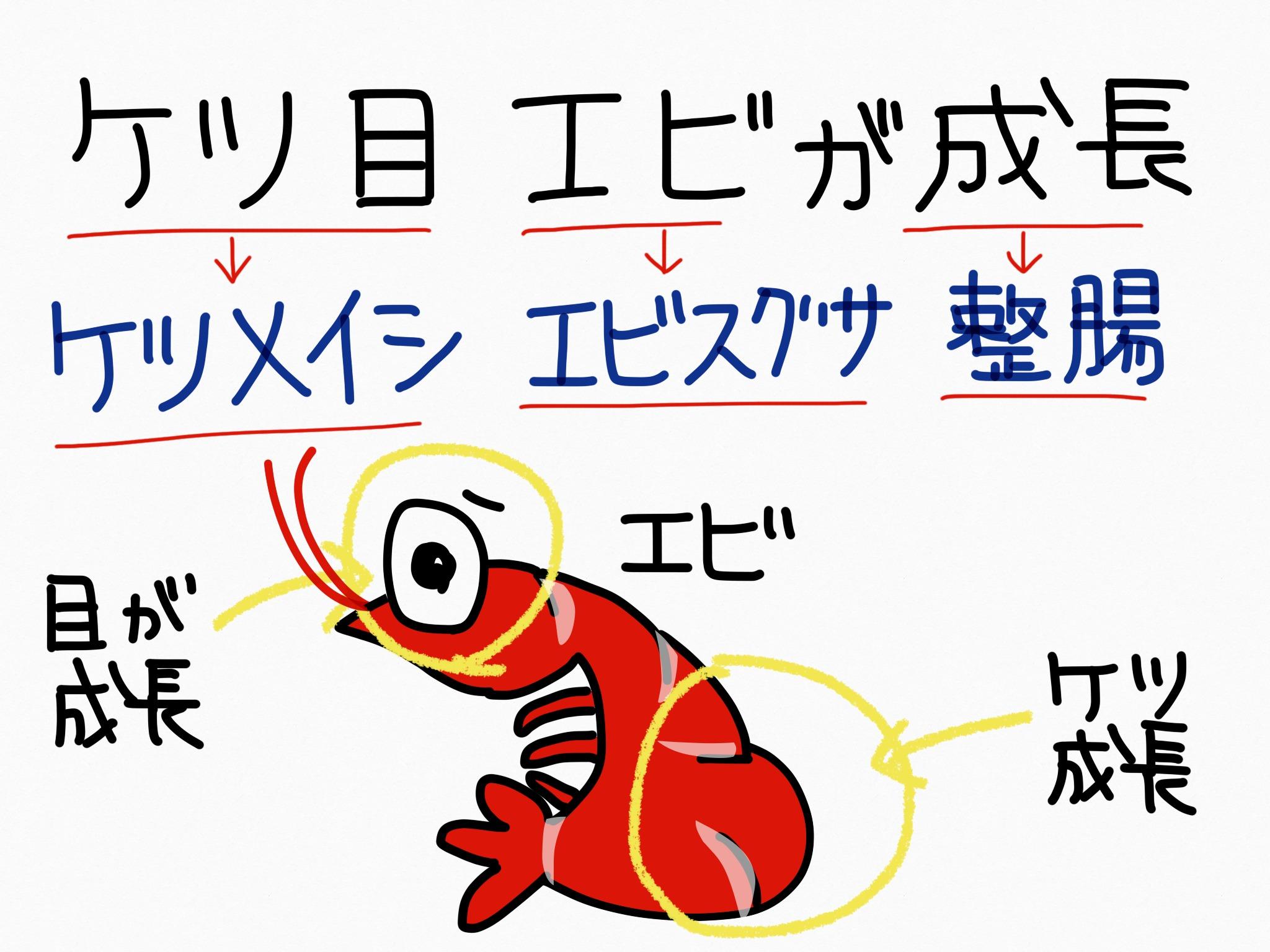 ケツメイシ[整腸薬]生薬の覚え方・暗記方法・語呂合わせ