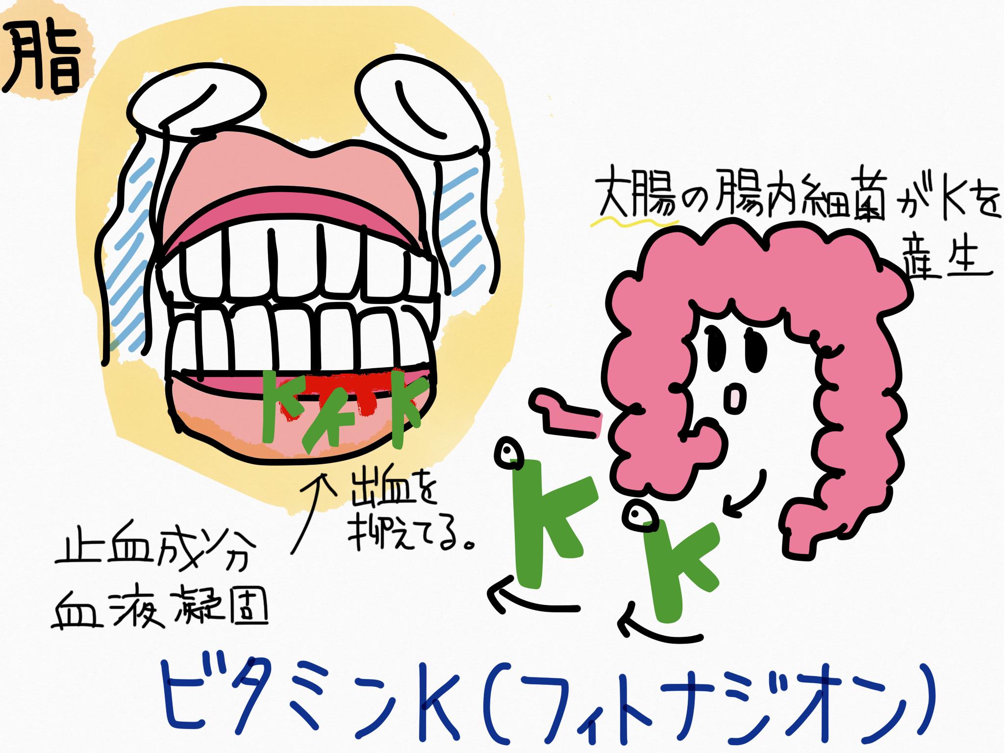 ビタミンK(フィトナジオン)の覚え方