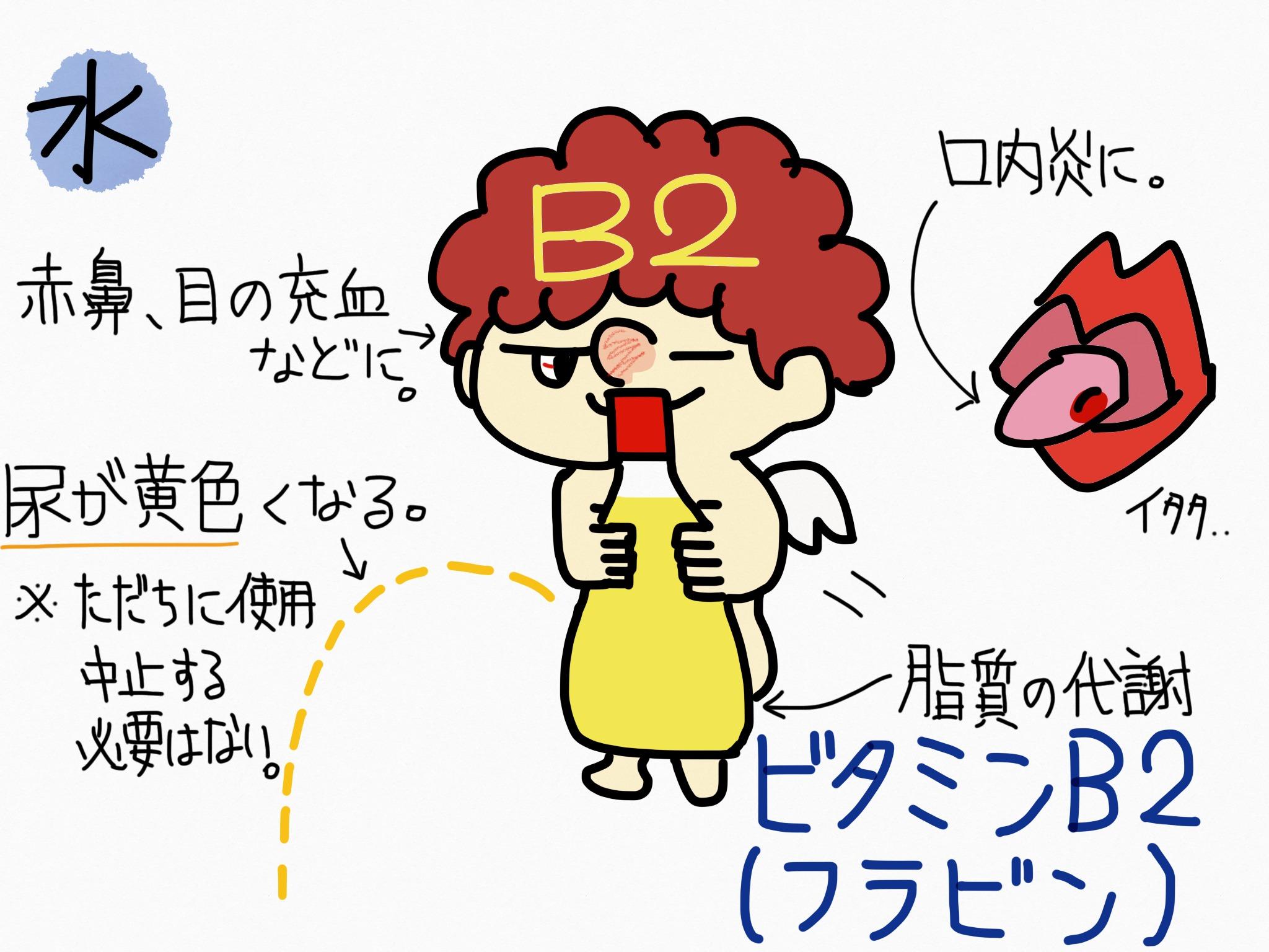 ビタミンB2(フラビン)の覚え方