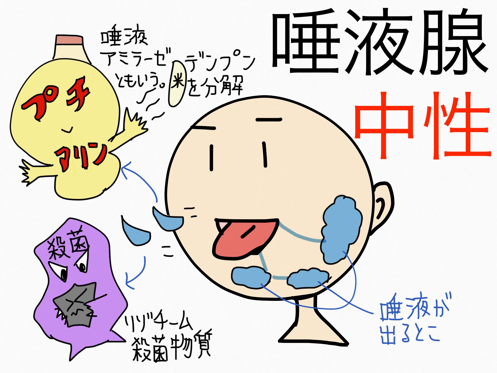 消化器系/口腔【第2章の覚え方】