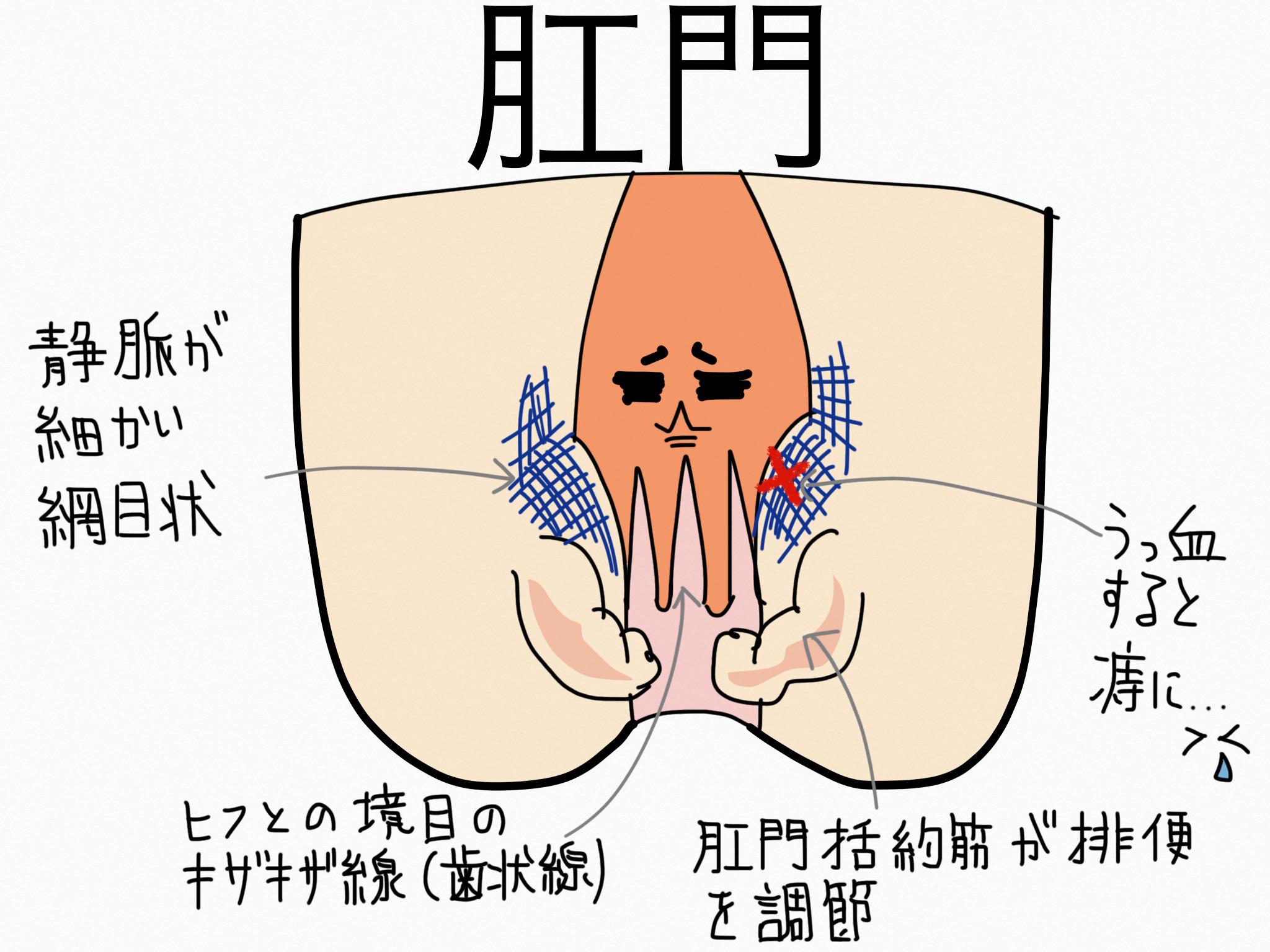 消化器系/肛門【第2章の覚え方】