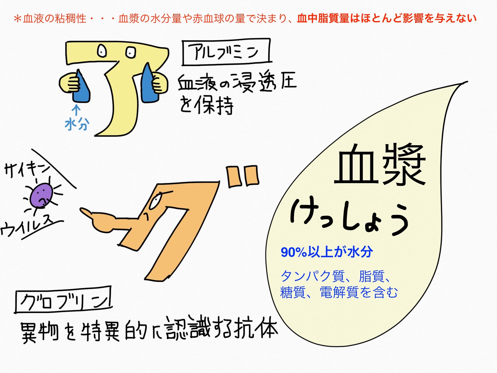 循環器系/血液、血漿【第2章の覚え方】