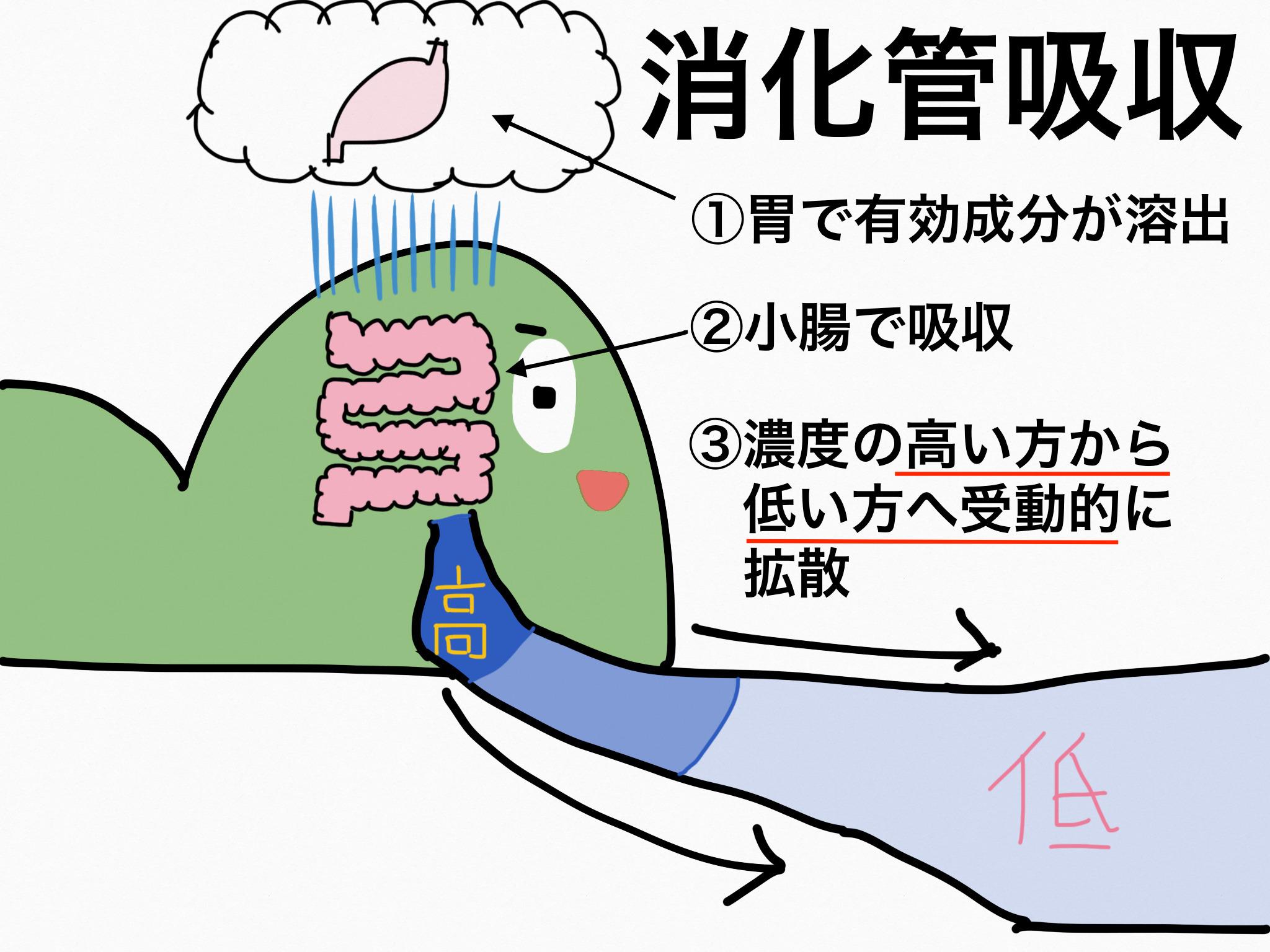 消化管吸収【第2章の覚え方】