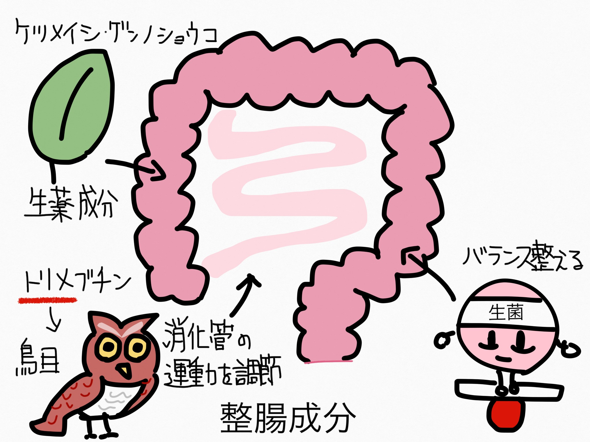 腸の薬の成分まとめ・覚え方①整腸成分