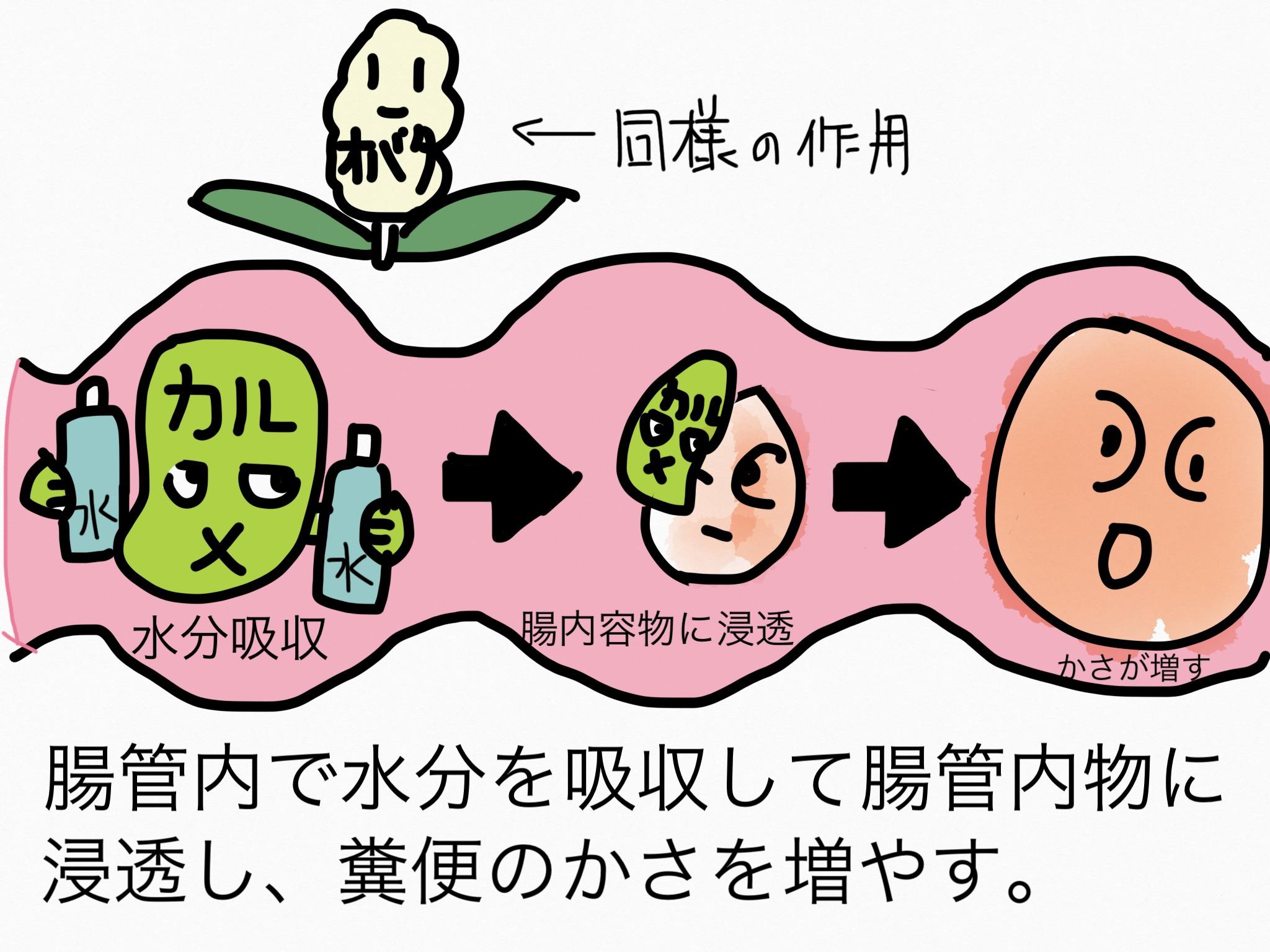 腸の薬の成分まとめ・覚え方⑧瀉下成分(膨潤性/その他)