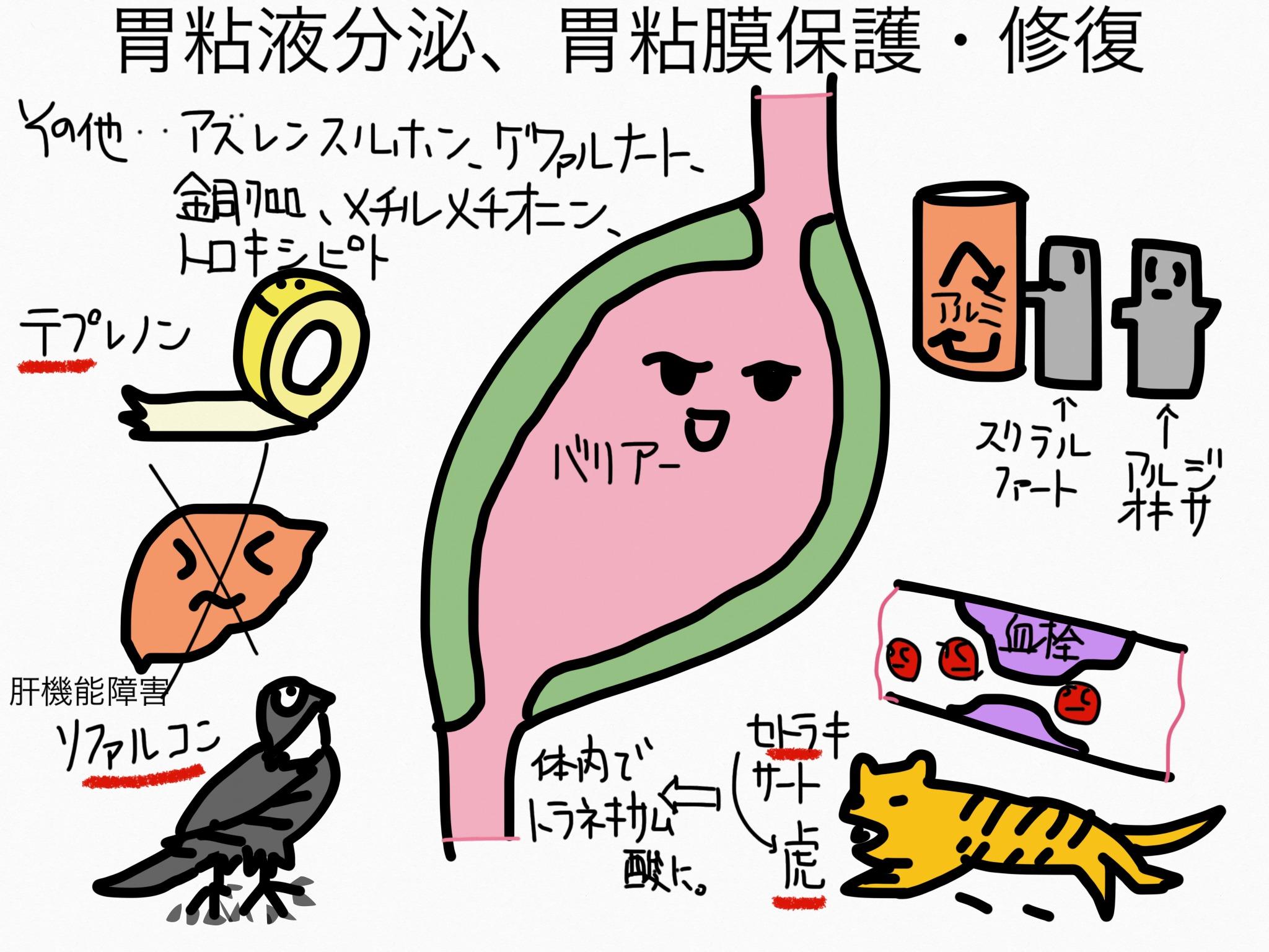 胃薬の成分まとめ・覚え方⑤胃粘膜保護・修復成分