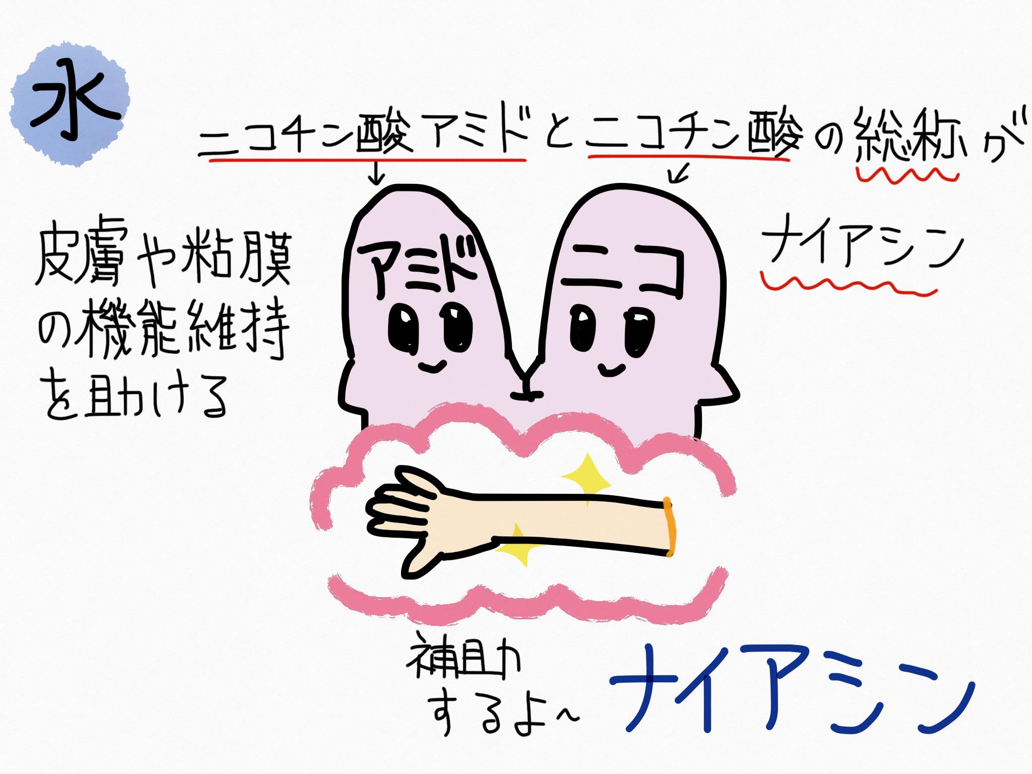 アミド 効果 酸 ニコチン