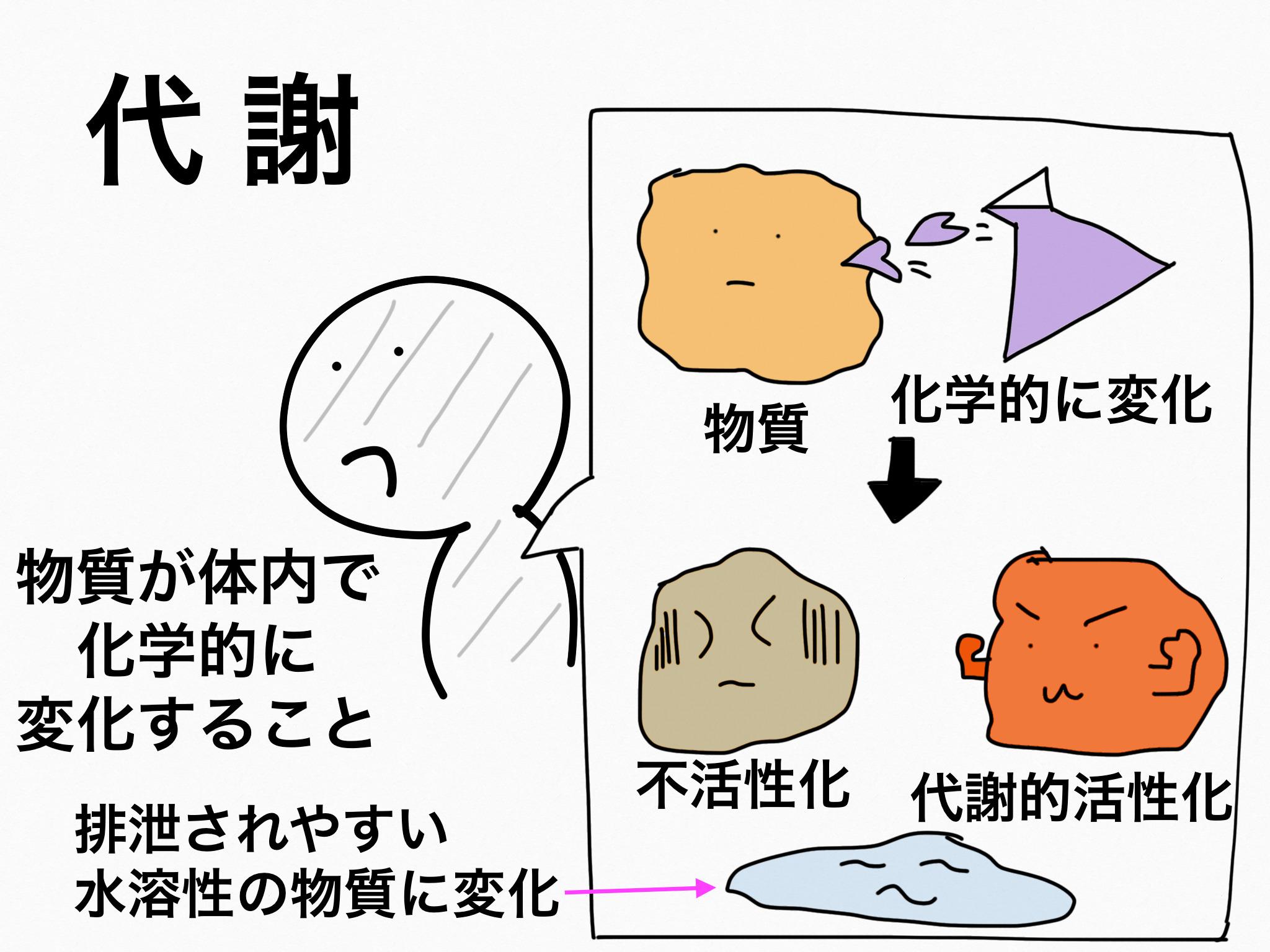 代謝・排泄【第2章の覚え方】