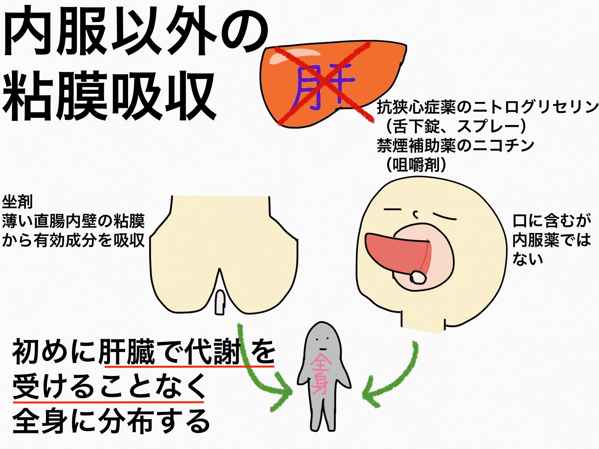 内服以外の用法における粘膜からの吸収【第2章の覚え方】